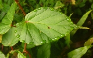 The rainy season starts in April